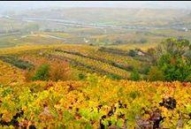 The El Bierzo Wine Region / A day with the wine maker - In the vineyards of Bodega Luzdivina Amigo in the Bierzo Wine Region