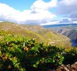 The Ribeira Sacra / Food and wine of the Ribeira Sacra wine region along the Rio Sil, Galicia
