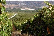 Ribera del Duero / Wine touring in the Ribera del Duero