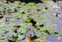 Monet's Garden / A visit to Monet's Garden in the Fall.