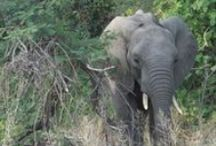 My trip to the Kruger National Park / Animals I saw!!!!