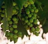 Maussane-les-Apilles / The wine and gastronomy of southern France
