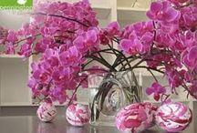 Royal fleurs