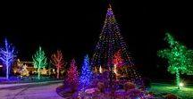 Christmas Trees Outside / Christmas Trees Outside