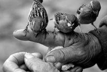 Manos   Hands