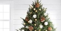 Christmas Trees Inside