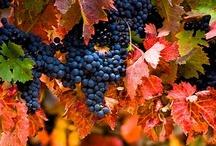 Vinyes / Viñas / Wineyards