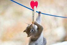 SCOUPY loves squirrels / Hou jij ook zo van eekhoorns? Like of repin jouw favoriete foto!