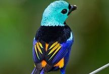 Birds / natural patterns, shapes, and color combinations from birds.