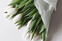 / FLOWERS