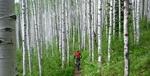 Singletracks News / Daily mountain biking news, reviews, and destination features from Singletracks.com