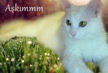 Kedi & Cat