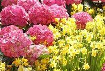 Çiçekler & Flowers