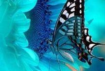 Kelebek & Butterfly