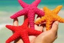 Deniz Yıldızı & Starfish