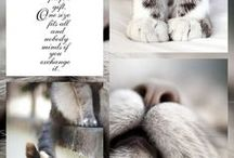 Cats, dogs & other cute❤