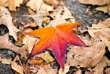 Fall / Automne