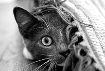 MEOW / MIAOU / Cats & Co - Chats & Cie
