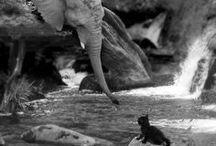 Elephant <3