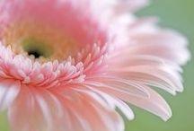 Flowers and magnificent plant world / Al sentir la naturaleza, el silencio se vuelve un paraiso maravilloso. / by serena nataly