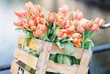Spring / Printemps