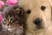 ANIMALS | Cats & Dogs