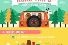 Places to Go with your dog