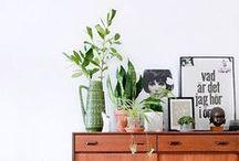 interiors – plants