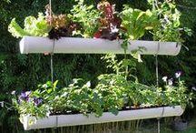 In my future garden