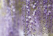 { flora } / wisteria and other flowers