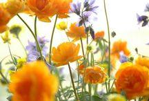 { flora of Siberia }