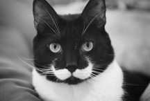 Animals with a moustache