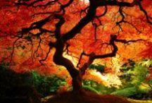 ¡Otoño! / Llega la belleza ocre del otoño y con ella, nuestras ideas en orden.