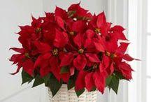 Ideas para Navidad / Ideas fantásticas para que el espíritu de la Navidad llene tu corazón y tus espacios.  #IdeasenOrden #Navidad #Decoracion