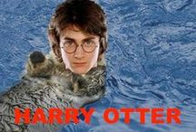 Harry Potter / Literally the title.