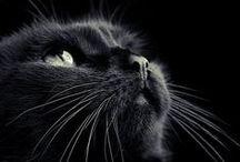 Awww cats!! / Cats, wonderful, beautiful, cute cats