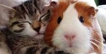 True friendship / There is nothing on this earth more to be prized than true friendship. - Thomas Aquinas