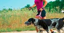 DOG Workouts / If you aren't going all the way, why go at all? - Joe Namath
