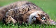 CAT Info & Care / Cats Versele-Laga