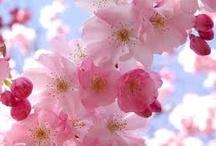 ✿⊱✿⊱ Spring Time!