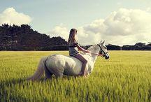 Equestrian bits & bobs