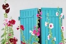 jardin / by Bettina M