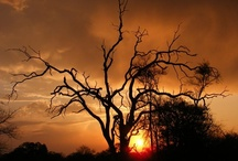 Askari based on beautiful Pidwa Wilderness Reserve / The Askari Conservation Programme is based on Pidwa Wilderness Reserve in the Limpopo province of South Africa. The reserve is set aside as a pure wilderness area and benchmark reserve