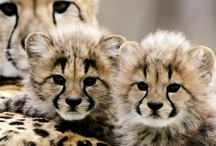 Wildlife pins we like from other pinteresters!