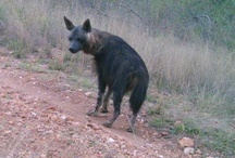 Askari Wildlife sightings