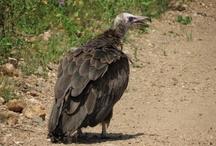 Birdlife at Askari
