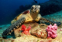 We Love Underwater