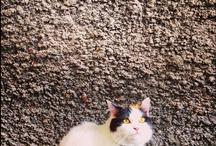 (=^x^=) MY CATS / by Kamijn .