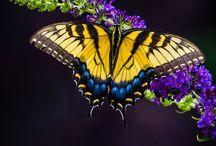 Butterflies / by Tina