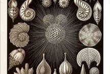 natural science illustrations